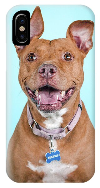 Pitbull iPhone Case - Frankie  by Pit Bull Headshots by Headshots Melrose
