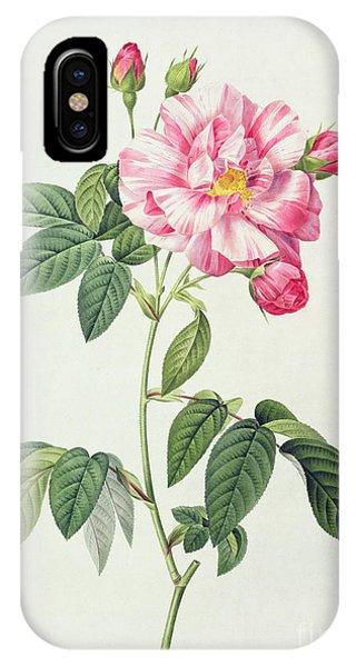 Botanical iPhone Case - French Rose by Pierre Joseph Redoute