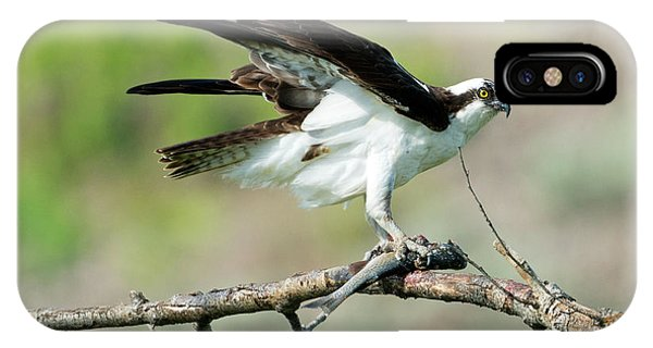 Ospreys iPhone Case - Fresh Fish by Mike Dawson