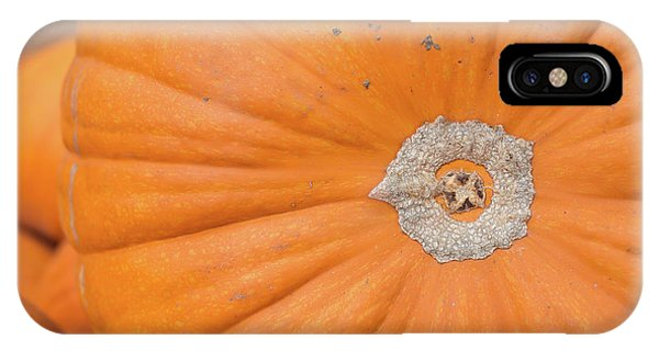 Fresh Organic Orange Giant Pumking Harvesting From Farm At Farme IPhone Case