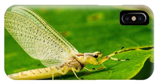 Pterygota iPhone Case - Freshly Emereged Mayfly by Douglas Barnett