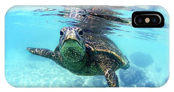 Eyes iPhone Case - friendly Hawaiian sea turtle  by Sean Davey