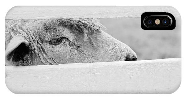 Friendly Sheep IPhone Case