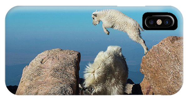 Leaping Baby Mountain Goat IPhone Case