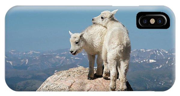 Frisky Mountain Goat Babies IPhone Case
