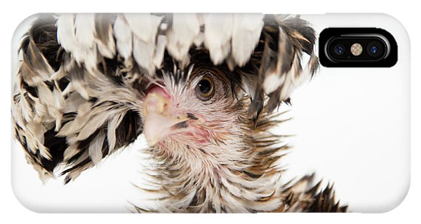 Frizzle Tolbount Polish Hen IPhone Case