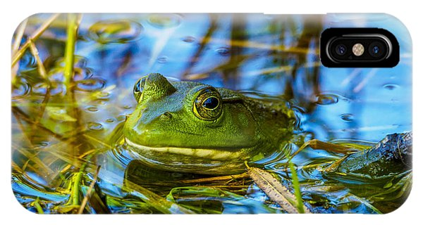 Frog In My Pond IPhone Case