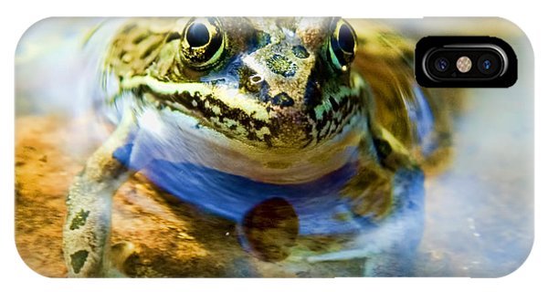 Frog In Pond IPhone Case