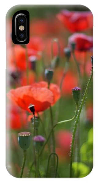 From Seed, To Seed IPhone Case