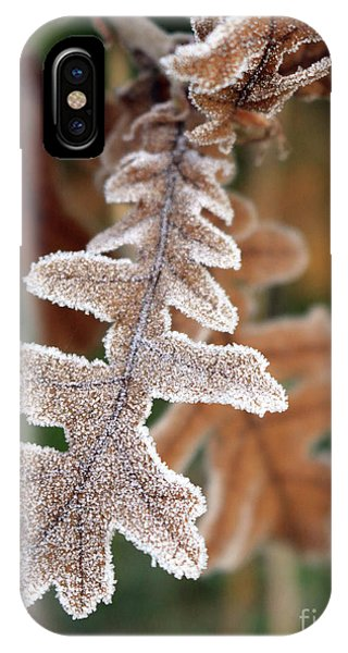 Frost Covered Oak Leaf IPhone Case