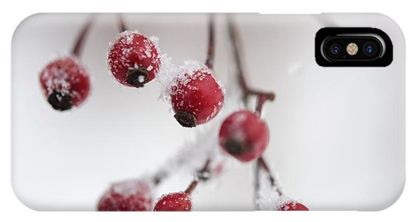 Frosted Berries IPhone Case