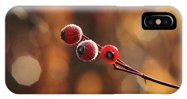 Rosebush iPhone Case - Frosted Rose Hips by Debbie Oppermann