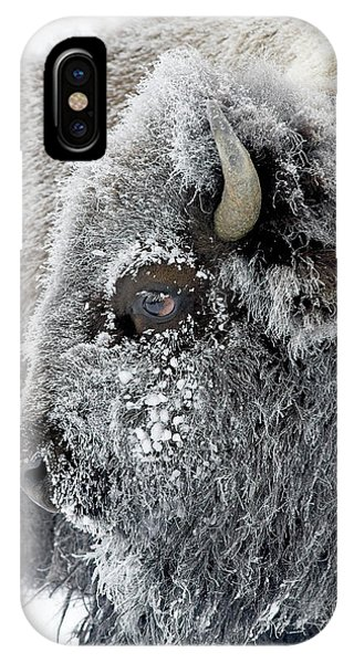 Frosty Bison IPhone Case