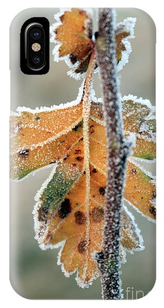 Frosty Leaf IPhone Case