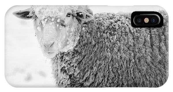 Sheep iPhone X / XS Case - Frozen Dinner by Mike  Dawson