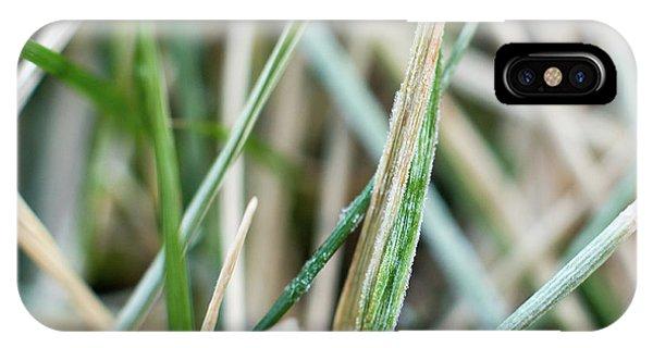 Frozen Grass IPhone Case