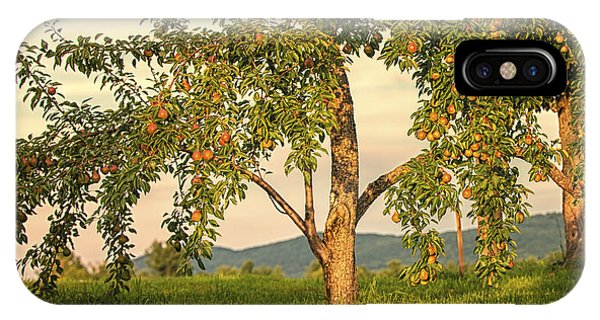 Fruit In The Orchard IPhone Case