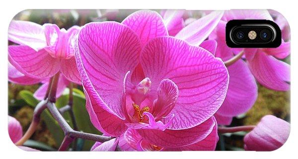 Fuchsia Flower Field IPhone Case