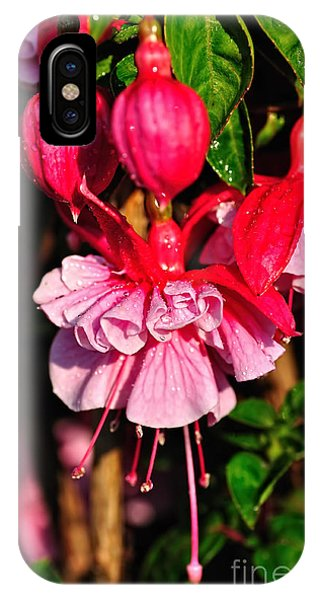 Fuchsias With Droplets IPhone Case