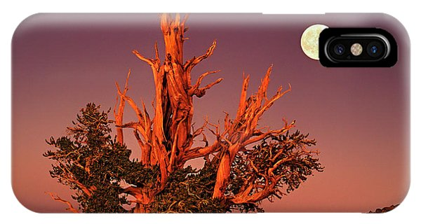 Full Moon Behind Ancient Bristlecone Pine White Mountains California IPhone Case