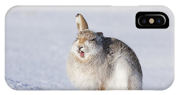 Funny Face - Mountain Hare - Scottish Highlands  #13 IPhone Case