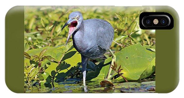 Fussy Little Blue Heron IPhone Case