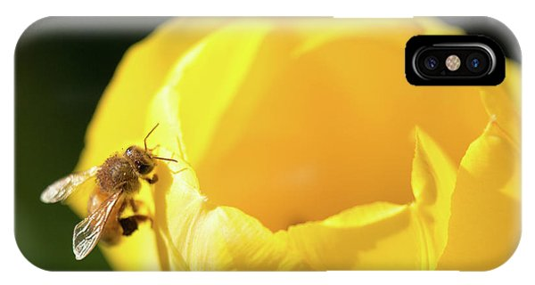 IPhone Case featuring the photograph Fuzzy Pollen by Brian Hale