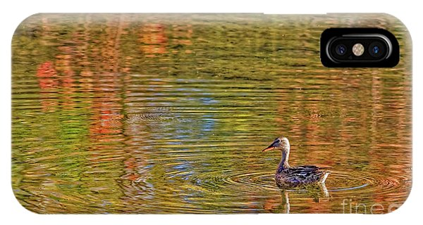 Gadwall In Fall IPhone Case