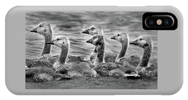Gaggle Of Goslings IPhone Case