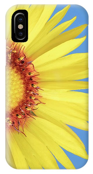 Gaillardia Aristata   Blanketflower IPhone Case
