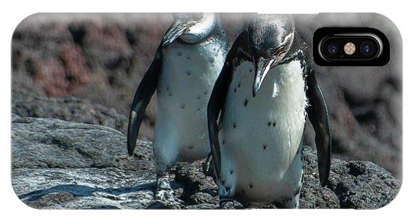 Galapagos Penguins  Bartelome Island Galapagos Islands IPhone Case