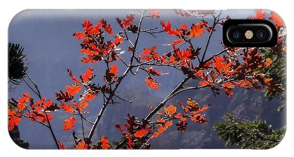 Gamble Oak In Crimson Fall Splendor IPhone Case
