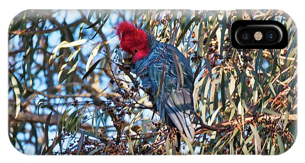 IPhone Case featuring the photograph Gang Gang Cockatoo - Canberra - Australia by Steven Ralser