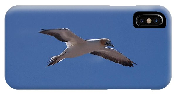 Gannet #1 IPhone Case