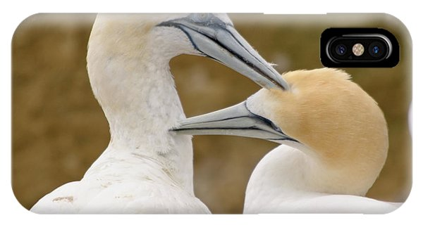 Gannet Pair 1 IPhone Case