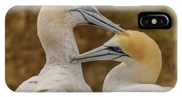 Gannets 4 IPhone Case