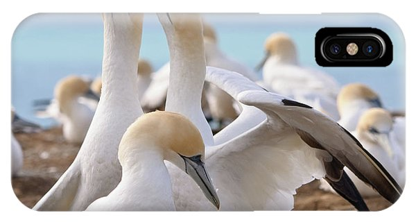 Gannets IPhone Case