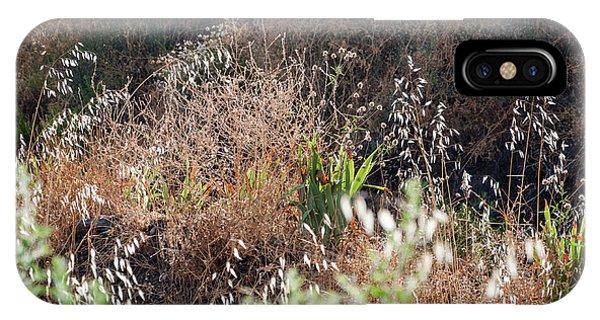 Garden Contre Jour IPhone Case