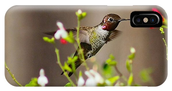 Garden Hummingbird IPhone Case