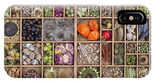 Sunflower Seeds iPhone Case - Garden Seed Pods by Tim Gainey