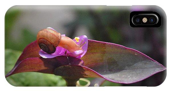 Garden Snails Wandering IPhone Case
