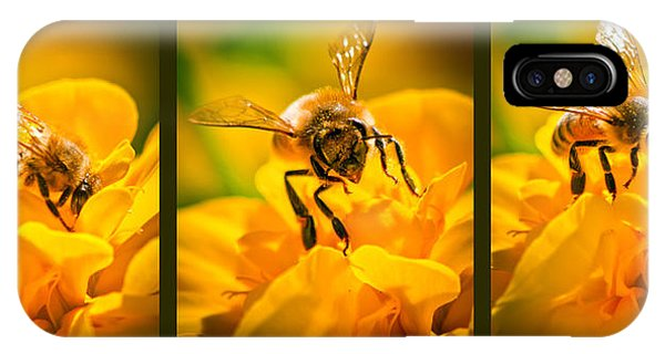 Honeybee iPhone X Case - Gathering Pollen Triptych by Bob Orsillo