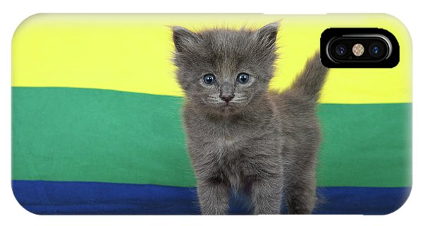 Gay Pride Flag iPhone Case - Gay Pride Grey Kitten by Sheila Fitzgerald