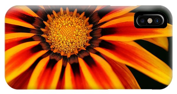 Gazania L IPhone Case