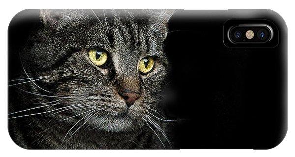 Cat iPhone Case - Gaze  by Paul Neville