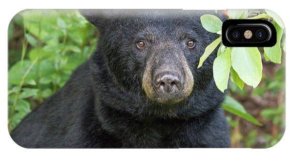 Gazing Black Bear IPhone Case