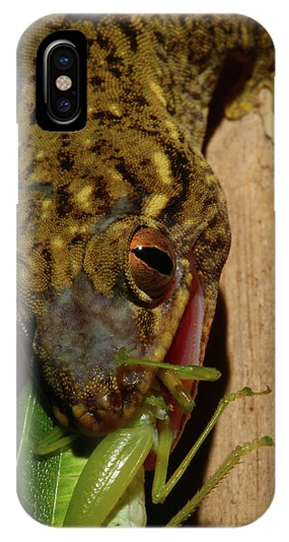 Gecko Feed IPhone Case