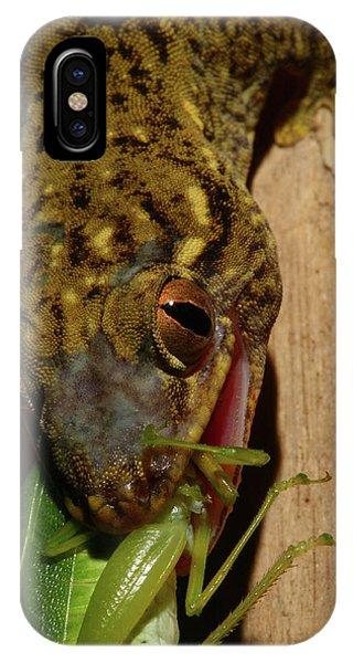 Gecko Feed IPhone Case