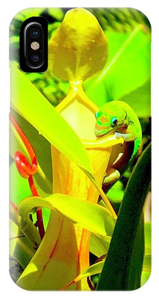 Gecko On Mosquito Catcher Orchid IPhone Case