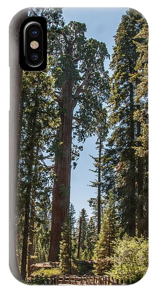 General Grant Tree Kings Canyon National Park IPhone Case